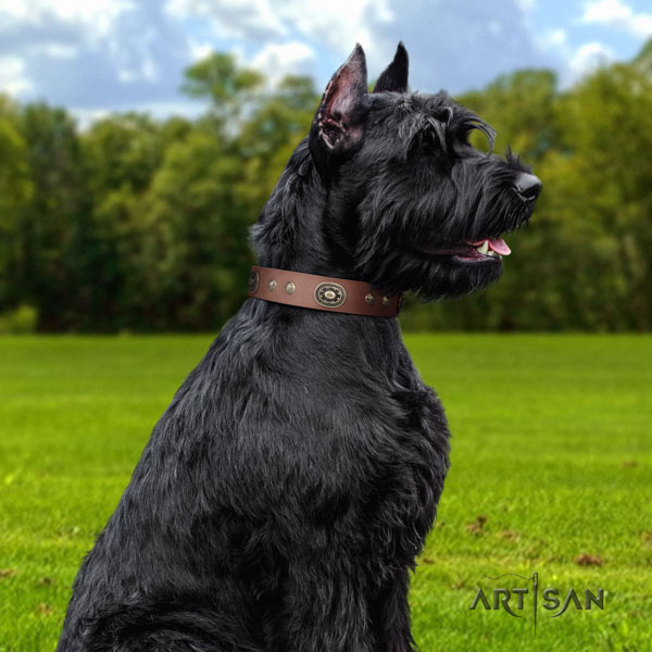 Riesenschnauzer handy use leather collar with embellishments for your canine