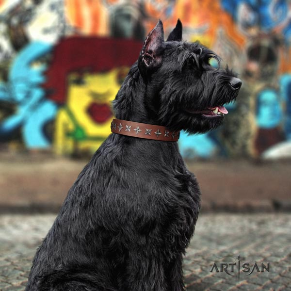 Riesenschnauzer comfy wearing full grain natural leather collar with studs for your four-legged friend