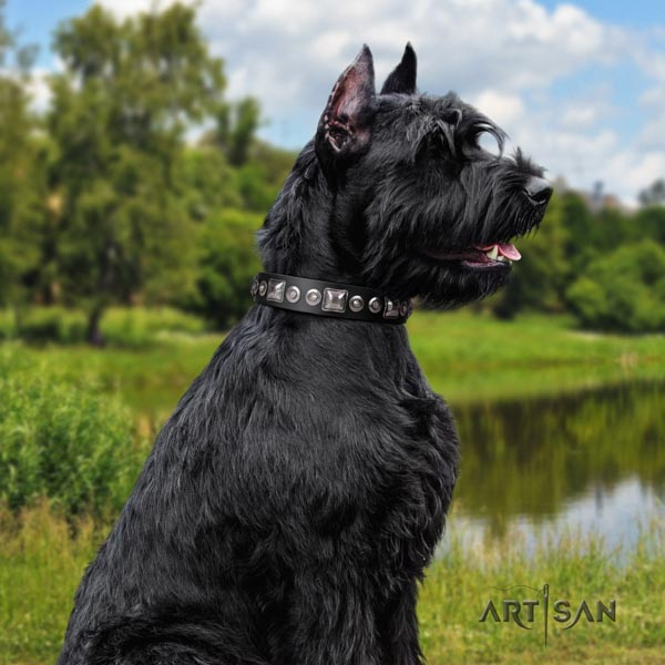 Riesenschnauzer daily walking full grain leather collar for your stylish canine