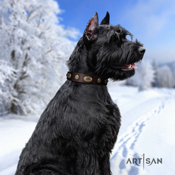 Riesenschnauzer daily use full grain natural leather collar with embellishments for your canine