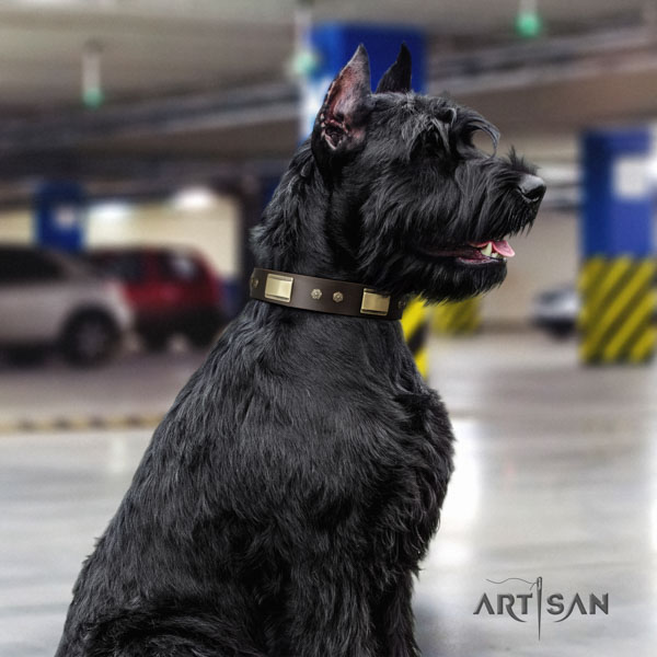 Riesenschnauzer daily walking full grain genuine leather collar with embellishments for your canine