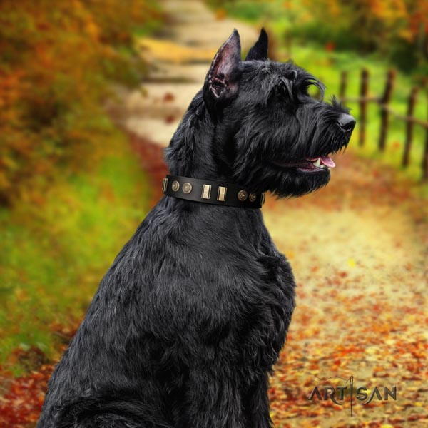 Riesenschnauzer walking natural leather collar with adornments for your canine