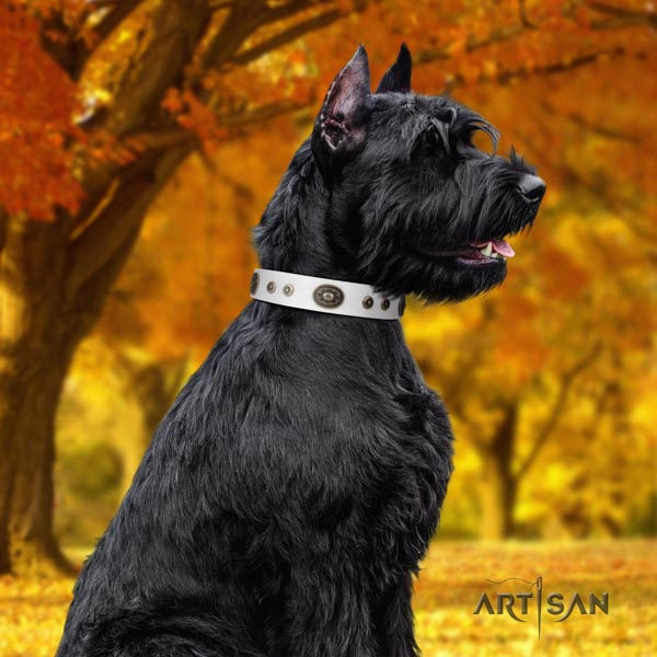 Riesenschnauzer basic training full grain natural leather collar for your handsome four-legged friend