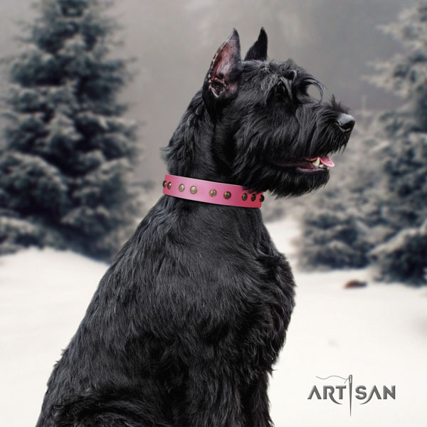 Riesenschnauzer walking natural leather collar with adornments for your four-legged friend