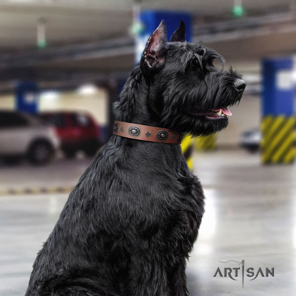 Riesenschnauzer everyday walking natural leather collar for your lovely pet