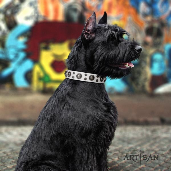 Riesenschnauzer daily walking full grain natural leather collar for your beautiful canine