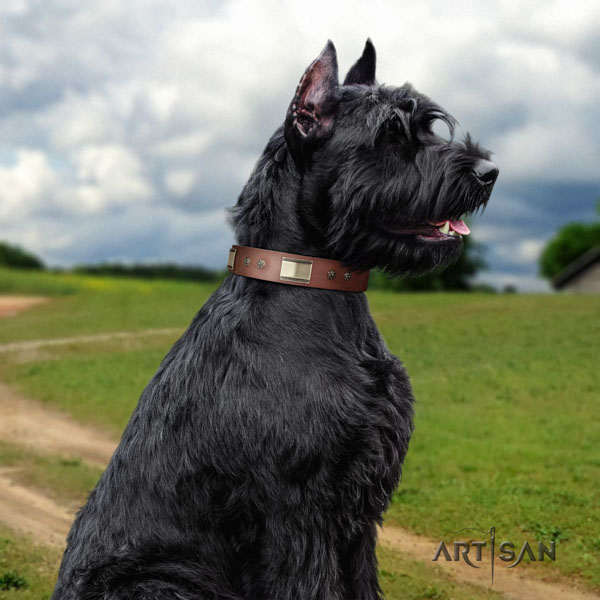 Riesenschnauzer daily walking genuine leather collar with embellishments for your pet