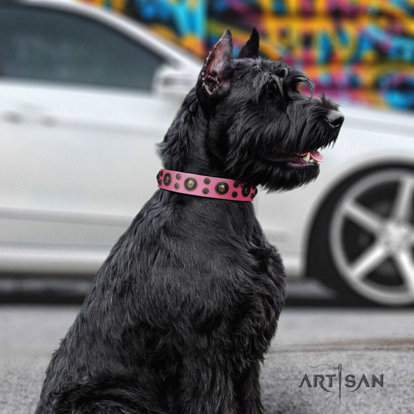 Riesenschnauzer daily use full grain leather collar for your attractive four-legged friend