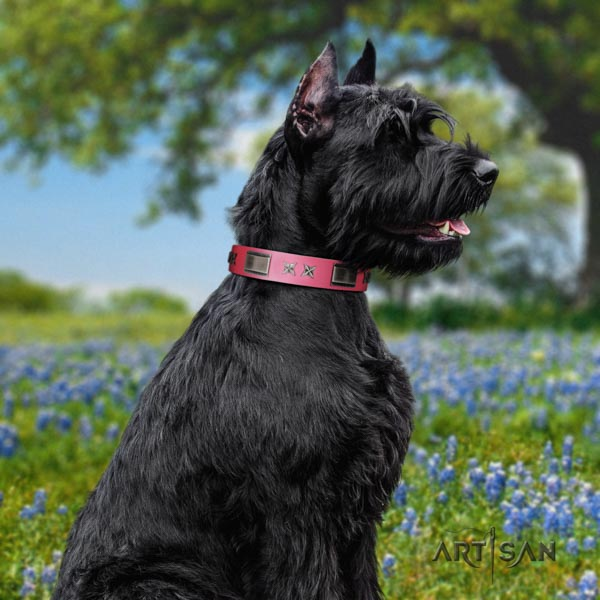 Riesenschnauzer daily walking full grain genuine leather collar with embellishments for your doggie