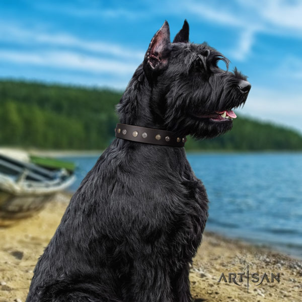 Riesenschnauzer easy wearing genuine leather collar for your beautiful doggie