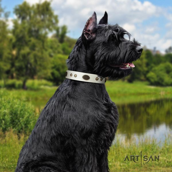 Riesenschnauzer daily walking full grain leather collar with studs for your pet