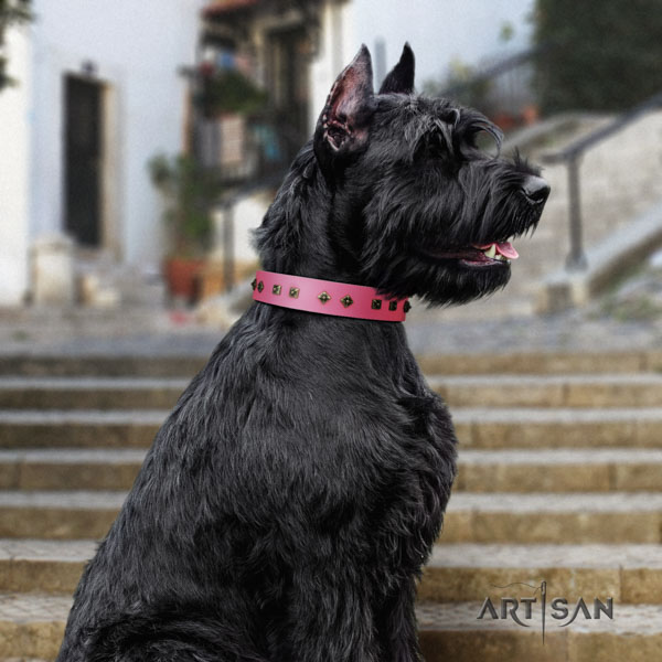Riesenschnauzer stylish walking natural leather collar with adornments for your pet