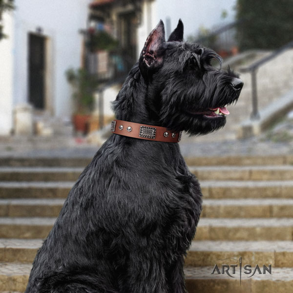 Riesenschnauzer comfortable wearing natural leather collar with studs for your pet