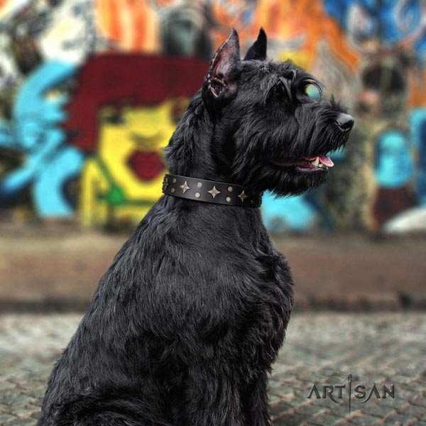 Riesenschnauzer easy wearing leather collar for your impressive doggie