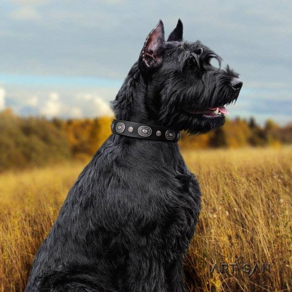 Riesenschnauzer daily use full grain genuine leather collar for your impressive dog