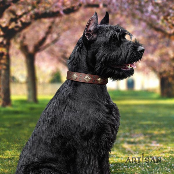 Riesenschnauzer basic training full grain leather collar with adornments for your doggie