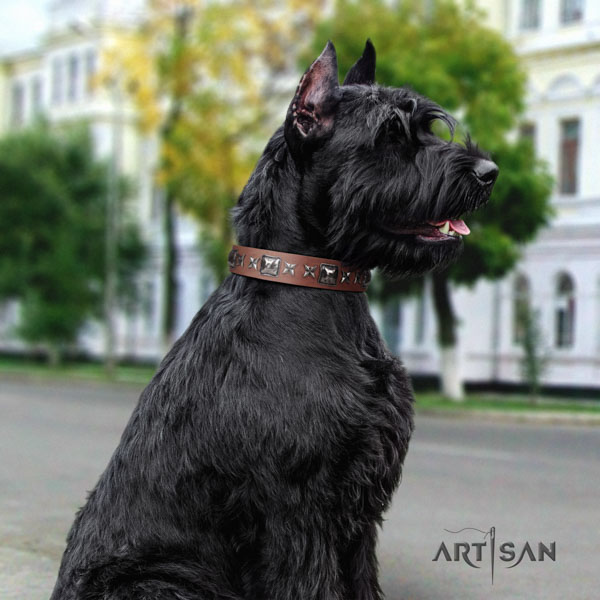 Riesenschnauzer daily walking full grain natural leather collar for your impressive dog