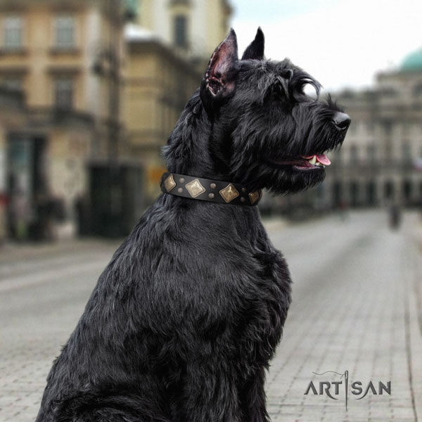Riesenschnauzer comfortable wearing natural leather collar with embellishments for your doggie