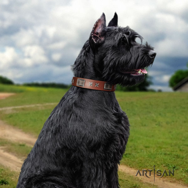 Riesenschnauzer everyday use leather collar with adornments for your doggie