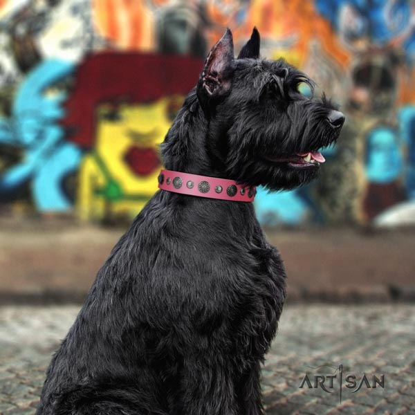 Riesenschnauzer handy use full grain natural leather collar with studs for your dog