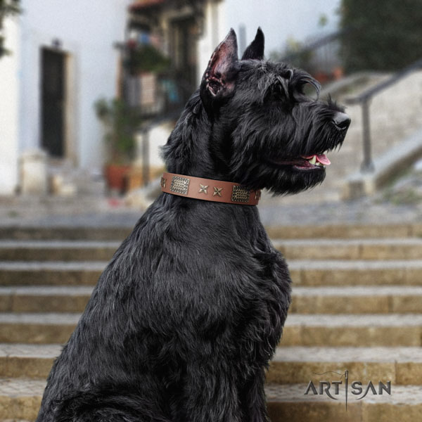 Riesenschnauzer daily use full grain genuine leather collar with embellishments for your four-legged friend