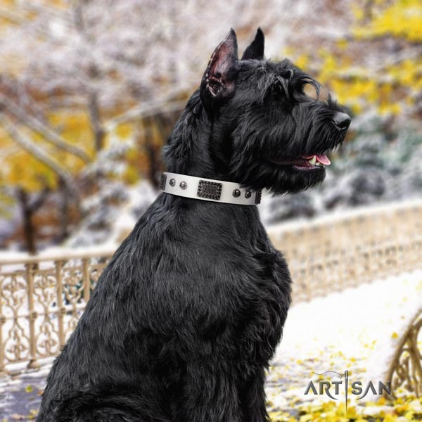 Riesenschnauzer stylish walking full grain genuine leather collar with studs for your canine