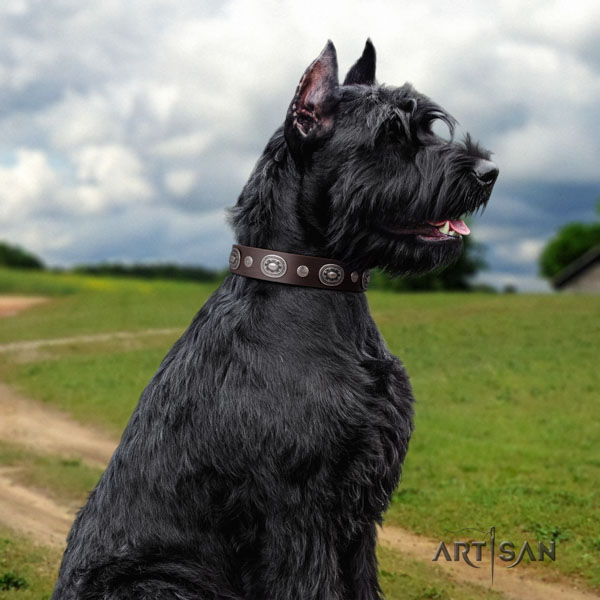 Riesenschnauzer comfy wearing full grain natural leather collar for your stylish pet
