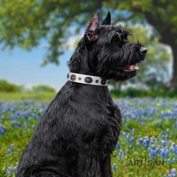 Riesenschnauzer comfortable wearing full grain natural leather collar for your impressive pet