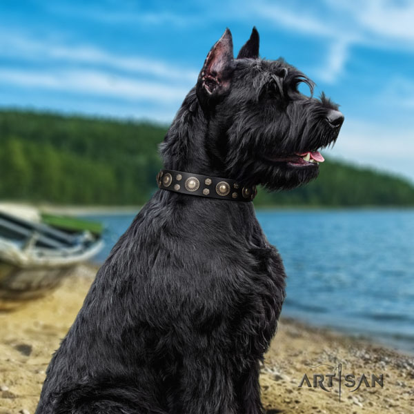 Riesenschnauzer stylish walking leather collar for your attractive doggie