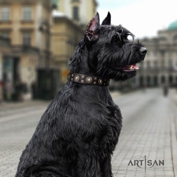 Riesenschnauzer comfortable wearing natural leather collar for your lovely dog