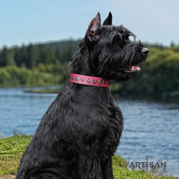 Riesenschnauzer everyday use natural leather collar with decorations for your doggie