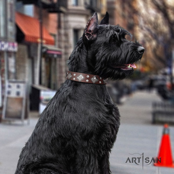 Riesenschnauzer comfy wearing genuine leather collar with adornments for your canine