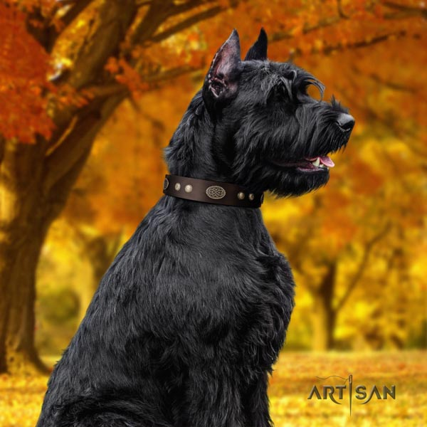 Riesenschnauzer easy wearing genuine leather collar with studs for your canine