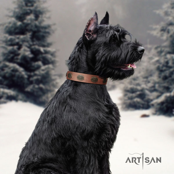 Riesenschnauzer daily use full grain genuine leather collar with adornments for your four-legged friend