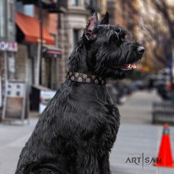 Riesenschnauzer everyday walking full grain genuine leather collar for your impressive dog