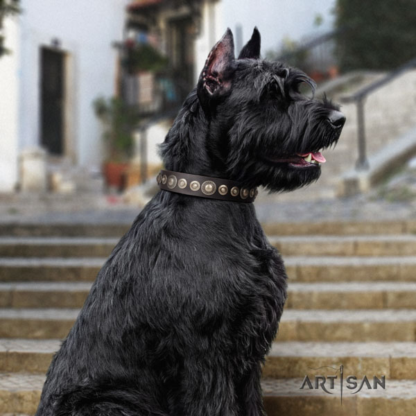 Riesenschnauzer easy wearing natural leather collar for your impressive doggie
