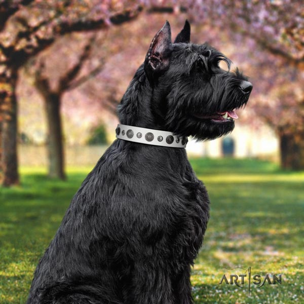 Riesenschnauzer everyday walking full grain natural leather collar with studs for your four-legged friend