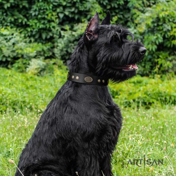 Riesenschnauzer everyday walking full grain leather collar with embellishments for your pet