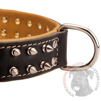 Padded Leather Riesenschnauzer Collar Spiked Adjustable for Training