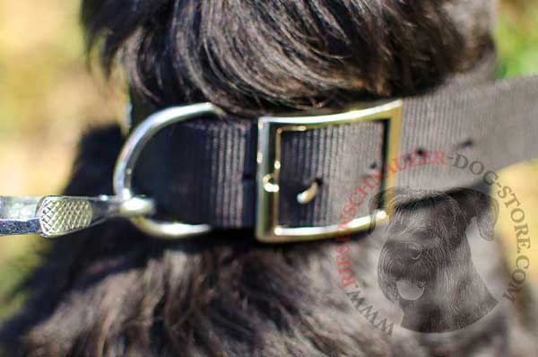 Strong rust-resistant ring ideal for fastening a canine leash