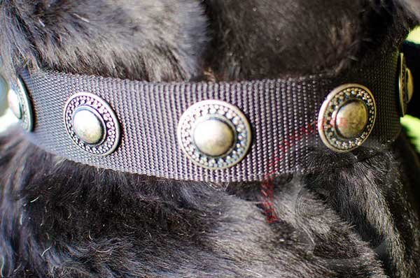Gorgeous vintage conchos on nylon wide dog collar