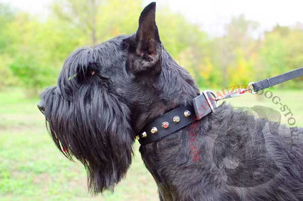 Nylon Riesenschnauzer collar cones decorated for walking and training