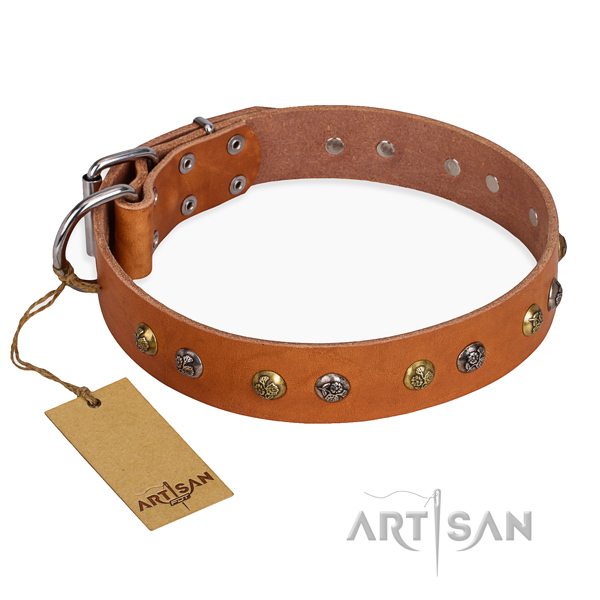 Fancy walking perfect fit dog collar with reliable traditional buckle
