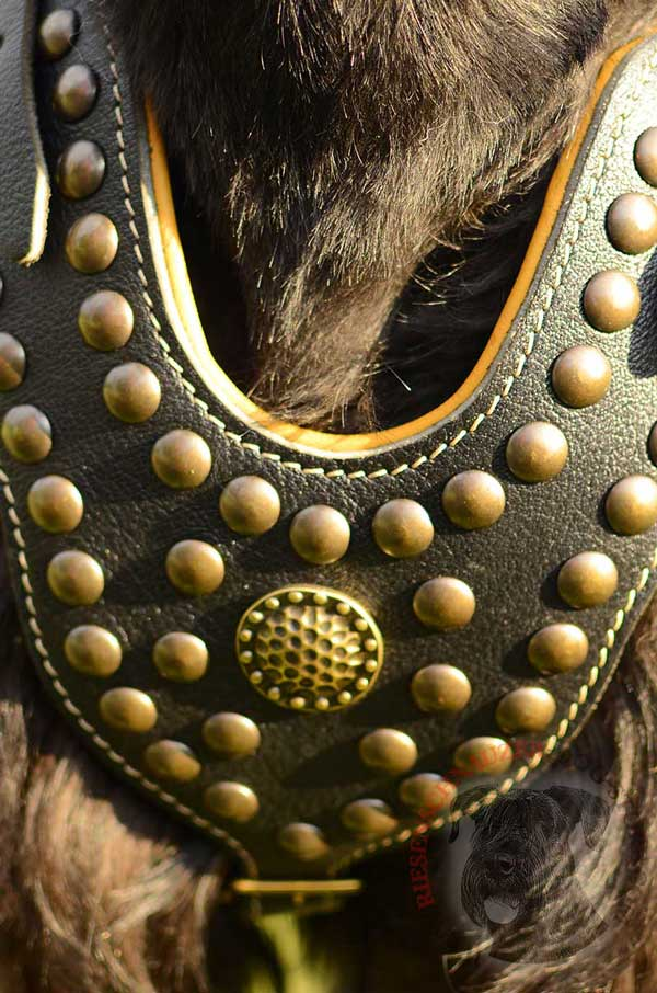 Brass Studs and Brooch Fixed with Rivets on Leather Riesenschnauzer Harness