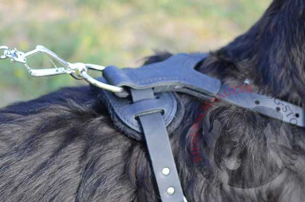 Nickel D-ring for Fast Leash Connection to Riesenschnauzer Harness