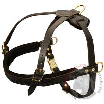 Leather Riesenschnauzer Harness for Dog Off Leash Training
