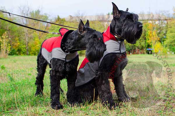Nylon Jacket for Riesenschnauzer Warming