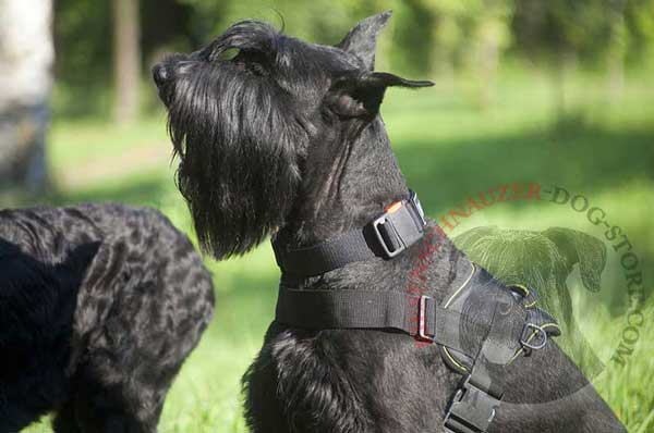 All Weather Riesenschnauzer Nylon Harness with Steel Nickel Plated D-rings