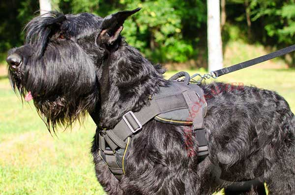 Water-proof Riesenschnauzer Nylon Harness