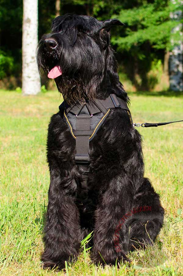 Nylon Harness with Soft Chest Plate for Riesenschnauzer Comfortable Walking